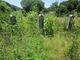 Allen Beaty Cemetery