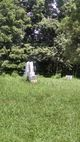 Ashley Collison Cemetery