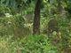 Clawson Plot Cemetery