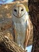 Owlsome History