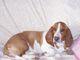 """Profile photo:  Gabby Abby """"Boogie"""" (Dog)"""