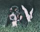 "Profile photo:  Mollie Brown ""Moochie"" (Dog)"