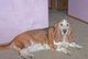 "Profile photo:  Sally ""Sue Sue Ahroo"" (Dog)"