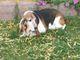 """Profile photo:  Jorchie Porchie """"Spud Man"""" (Dog)"""