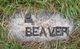 P Beaver
