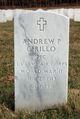 Andrew P Cirillo