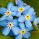 Forget Me Not Gravesite Caregivers