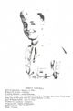 Pvt Lewis Franklin Cantrell