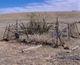 Harrison San Rafael Valley Burial Site