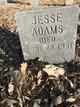 Profile photo:  Jessie Rens Adams