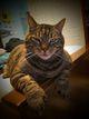 Darius The Cat