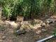 Cinnamon Bay Plantation Cemetery
