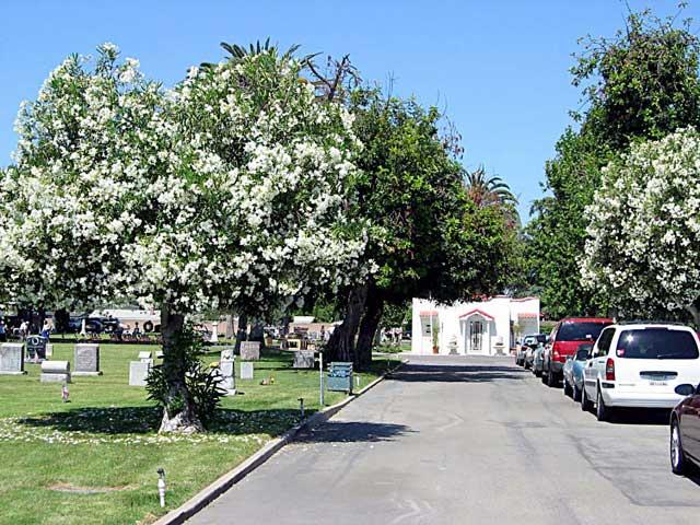 Magnolia Memorial Park