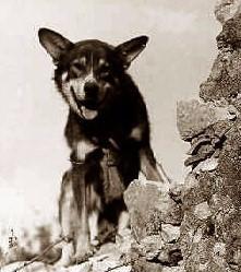 War Dog Chips