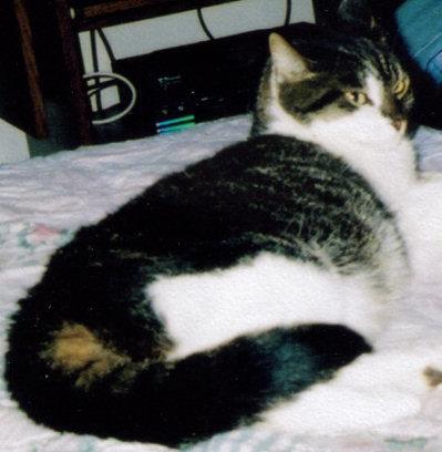 Maya (Cat) Mayalina Albieri Styers