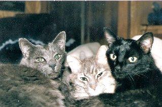 Vader,Elouise & Shadow <i>Felines</i> Heywood