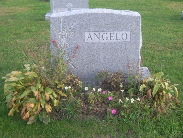Ann C Angelo
