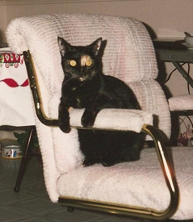 Sparkie <i>Cat</i> Chidsey