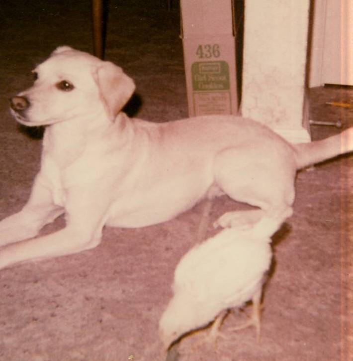 Buffy Canine Tuffy Martin