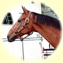 Fraise The Horse