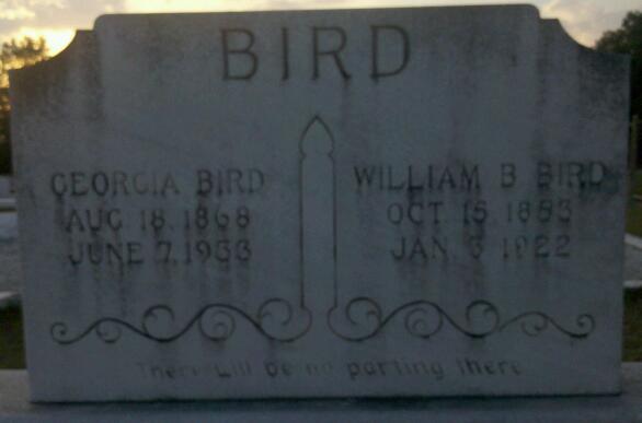 Georgia <i>Bishop</i> Bird