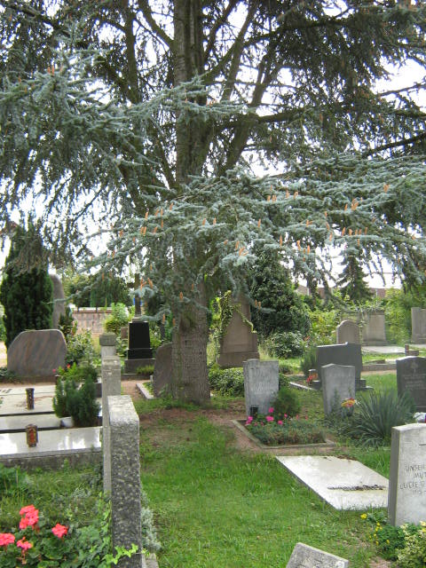 Friedhof Mainz-Kastel