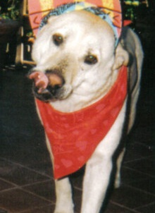 Goldie The Dog