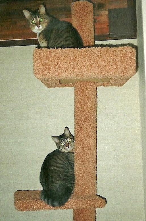 Little Buddy &#9829; Love Beloved in Jesus <i>Hecht</i> Cat