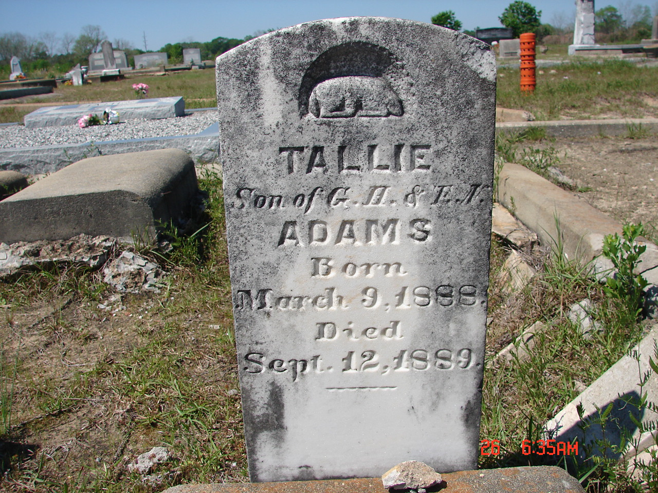 Tallie Adams