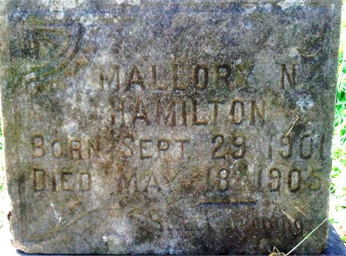 Mallory N Hamilton