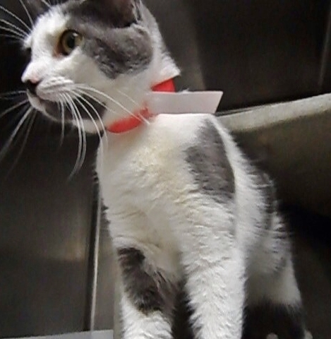 Bella Sweet~Girl The Cat