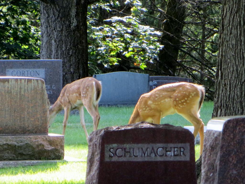 Conrad Memorial Cemetery