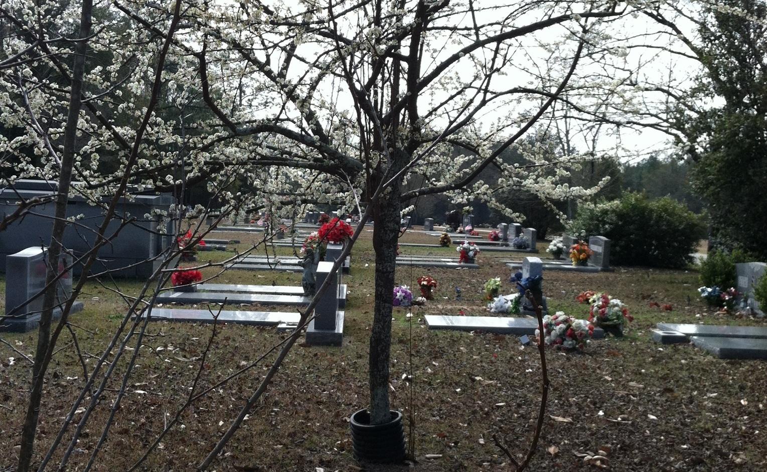 Bertha Dozier Memorial Park Cemetery