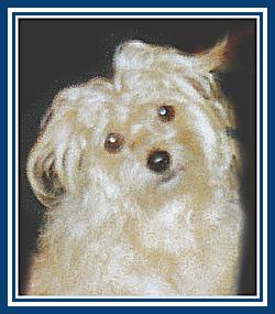 Mickey Mac MicMac Dog