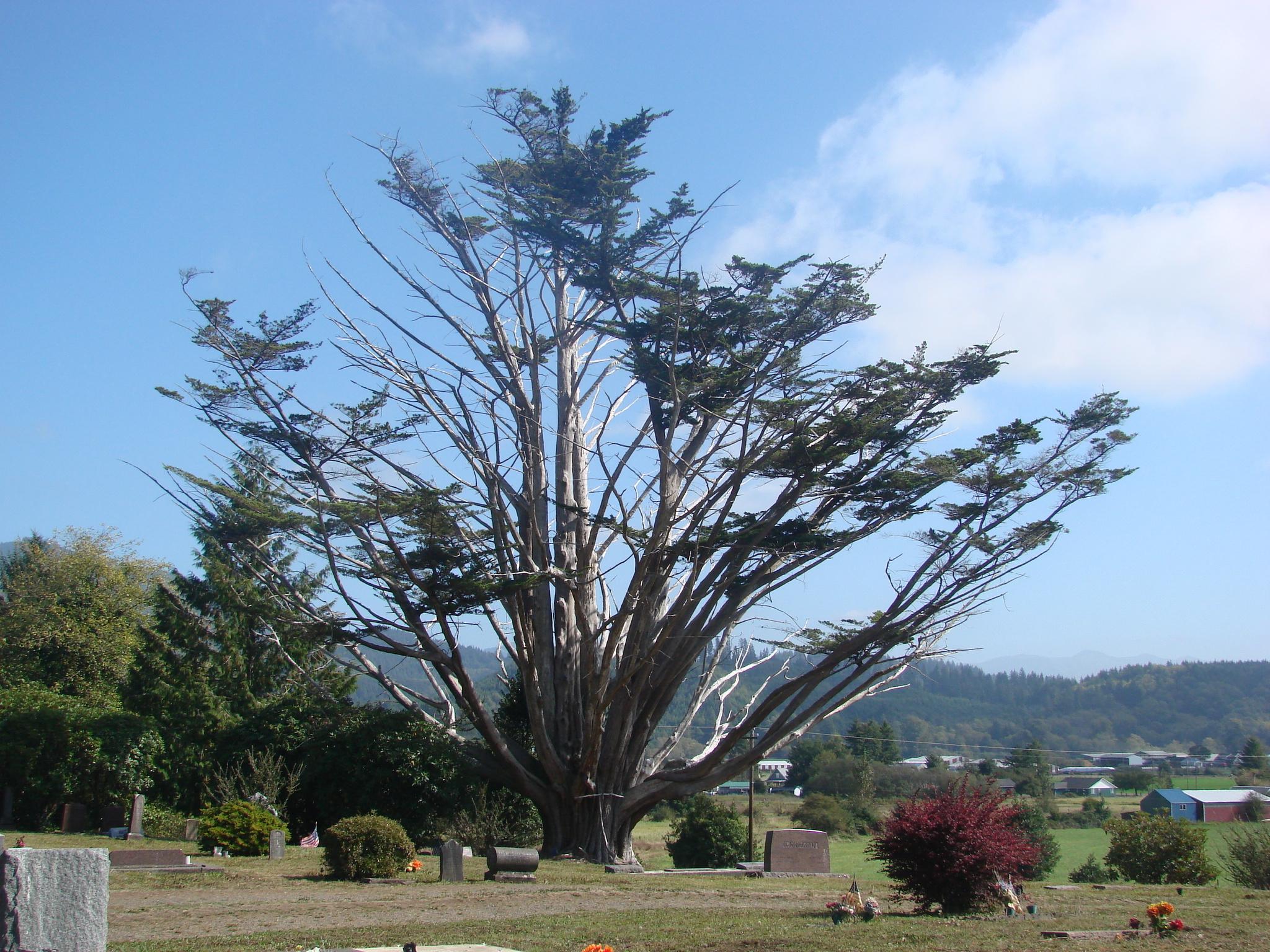 Bay City IOOF Cemetery