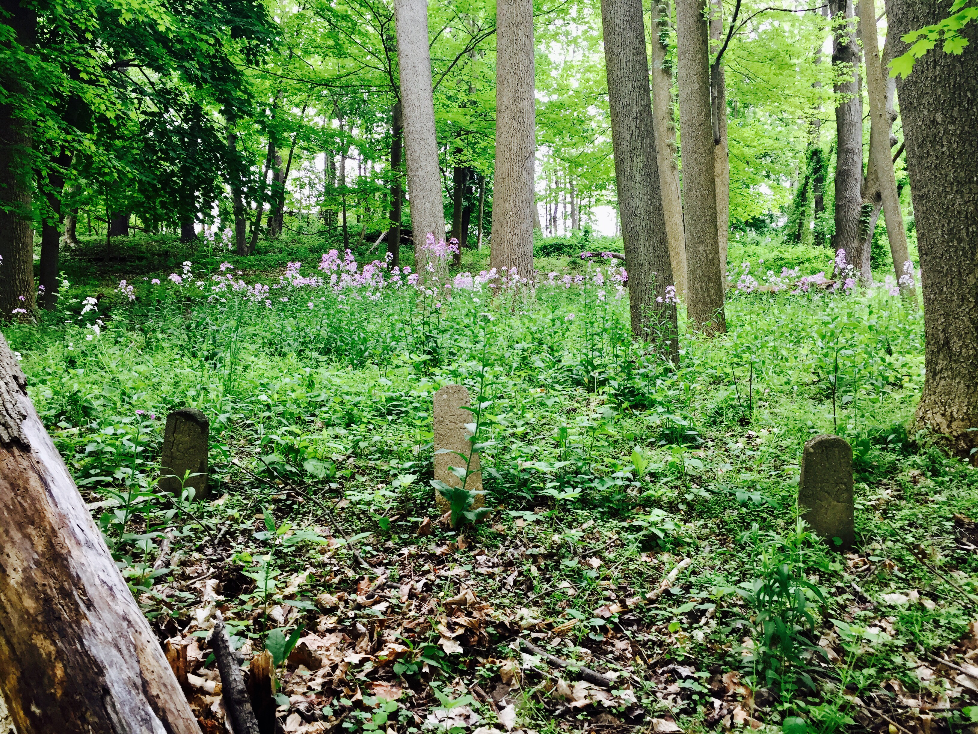 Dixmont State Hospital Cemetery