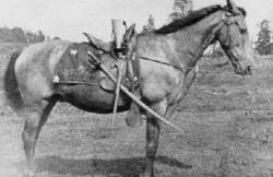 Warhorse Frank