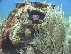 Eternal Reefs Memorial