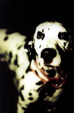 Lou Dog
