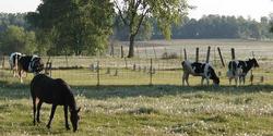 Granton Amish Community Cemetery