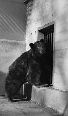 smokey bear 1950 1975 find a grave memorial