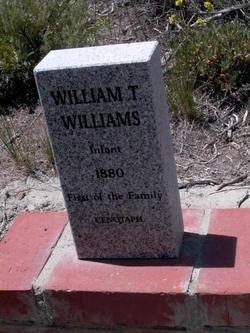 William T Williams