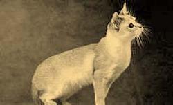 Andrew Pet Cat