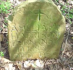Amelia Harrison