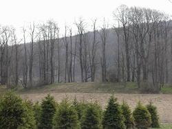 Cortland County Farm Cemetery