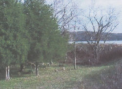 Shirley Family Cemetery