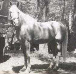 """""""Wonder Horse"""" Tarzan"""