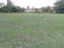 Mount Pleasant Meeting House Cemetery