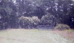 Geiger Family Cemetery