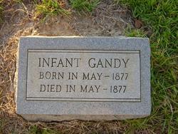 Infant Gandy